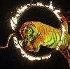 Цирки в Новосергиевке