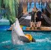 Дельфинарии, океанариумы в Новосергиевке